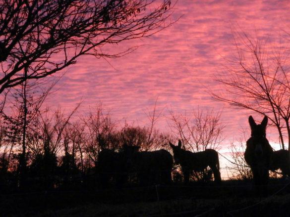 Sunset at Ferme du Champ du Parc